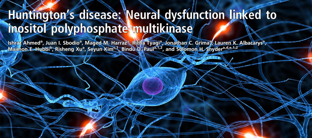 Work by Ishrat Ahmed (Entering Class of 2009) elucidates the pathophysiology of Huntington's Disease